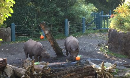 Palm Oil Takes the Spotlight at Woodland Park Zoo