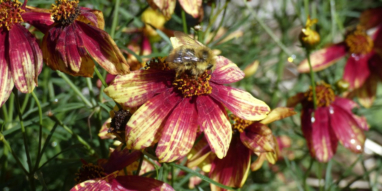 Simple Tips For Creating an Alluring Pollinator Paradise