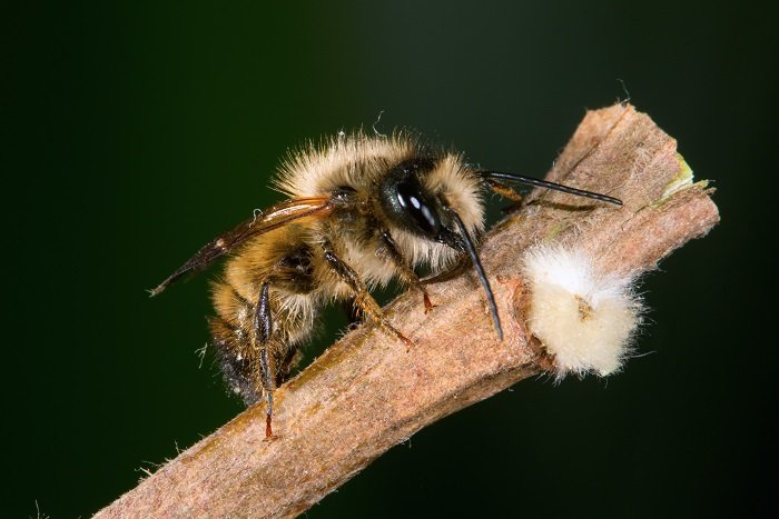 How To Attract Mason Bees in Three Simple Steps
