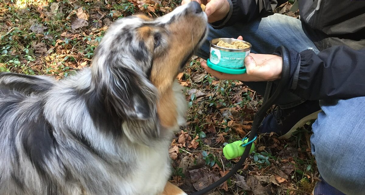 ECOlunchbox: A Breakthrough For This Busy Dog Dad
